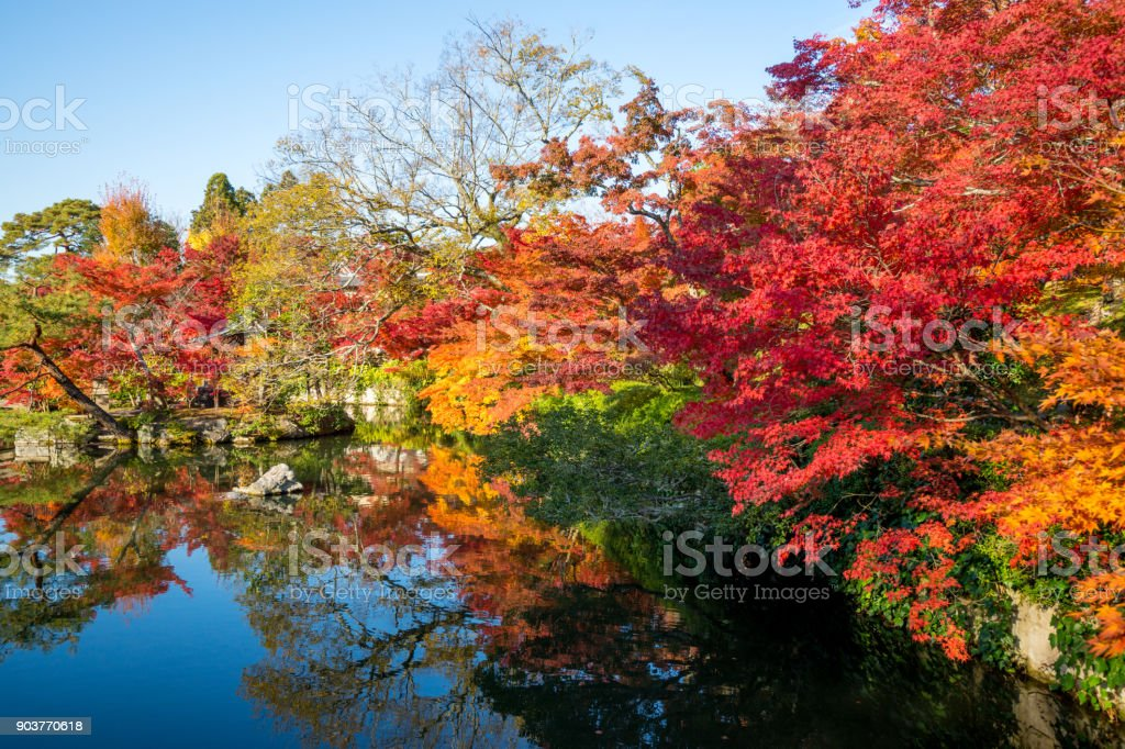Color Autumn tree with water reflection , zen garden stock photo