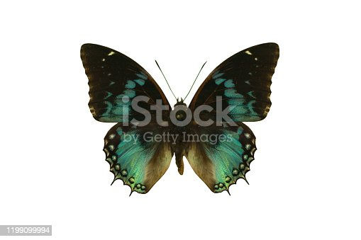 Color beautiful butterfly flying, isolated on white