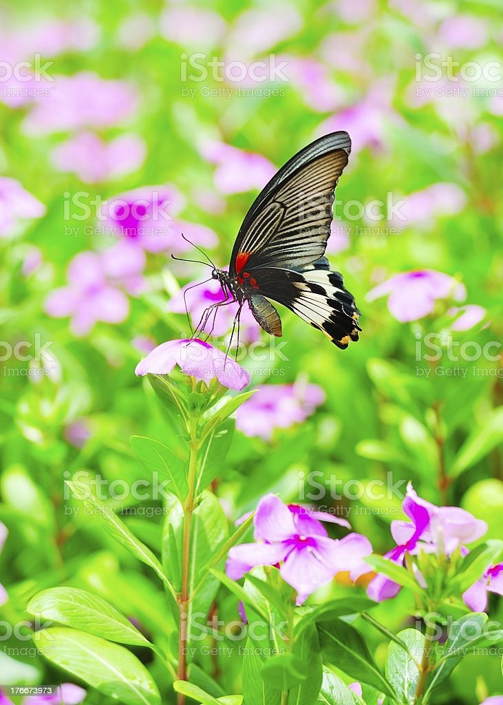 Color Butterfly and flowers 01 royalty-free stock photo