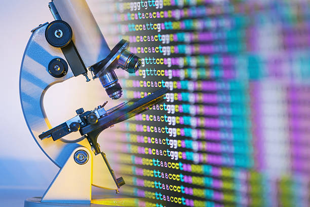 color coded DNA sequence on monitor with microscope color coded DNA sequence on monitor with microscope nucleotide stock pictures, royalty-free photos & images