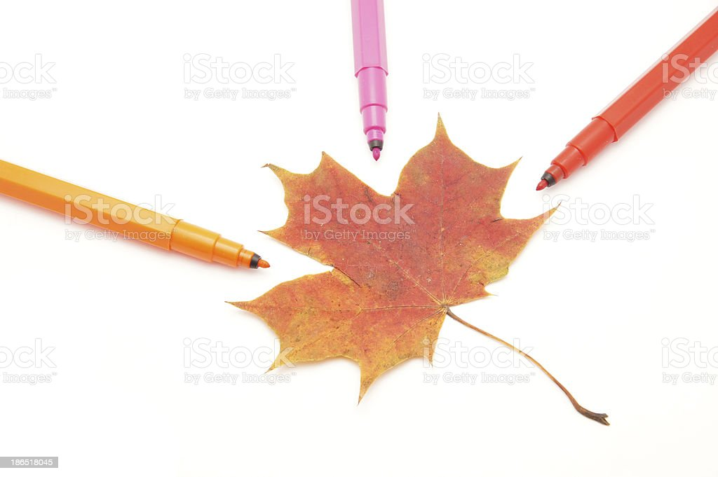 Color felt-tip pens and leave on a white background royalty-free stock photo