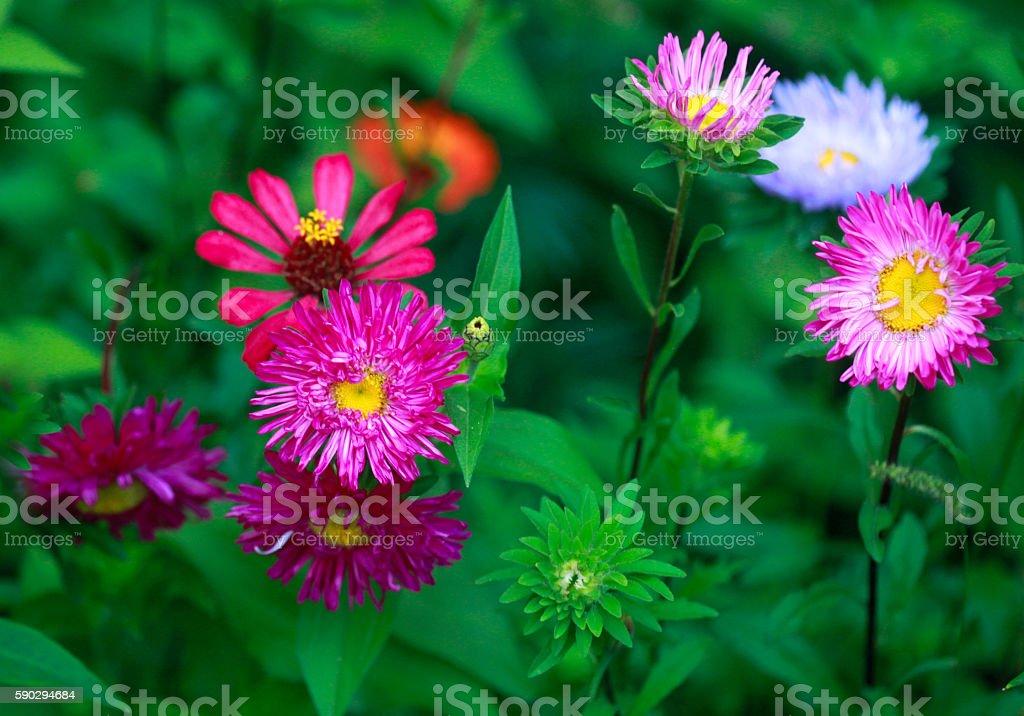 color flowers royaltyfri bildbanksbilder