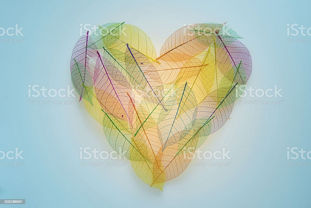 Color Heart shaped leaves transparent texture stock photo