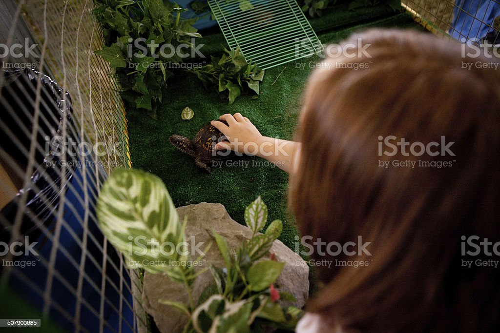 Color Image of Young Girl Touching Turtle at County Fair royalty-free stock photo