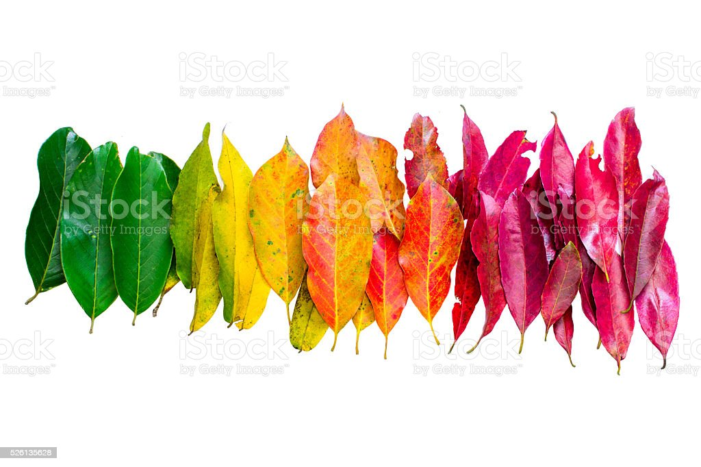 Color leaf of nature stock photo