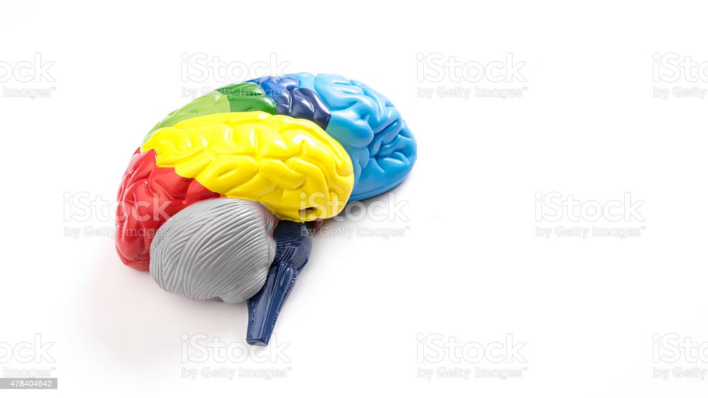 Color mapped brain lobe area. Isolated on white background stock photo