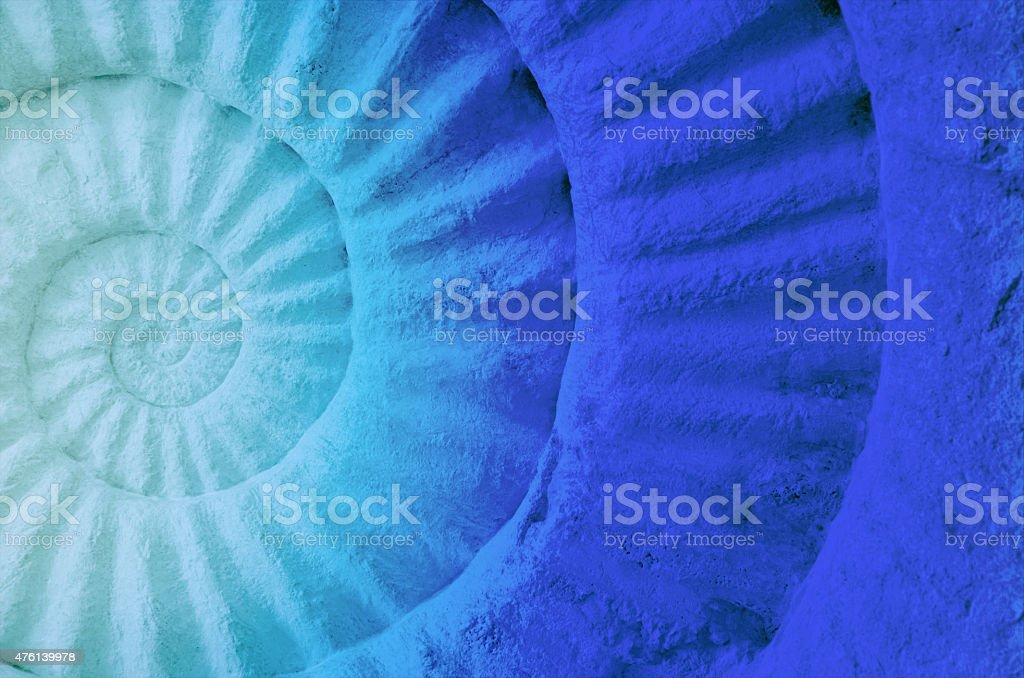 Color of ammonite prehistoric fossil. stock photo