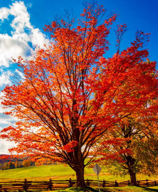 Color of Fall 2018 stock photo
