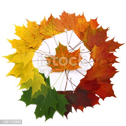 istock color palette from autumn leaves, isolated 1051752652
