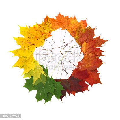 istock color palette from autumn leaves, isolated 1051752660
