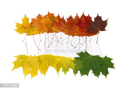 istock color palette from autumn leaves, isolated 1051752664