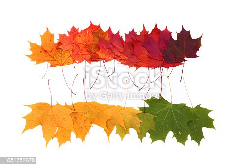 istock color palette from autumn leaves, isolated 1051752678