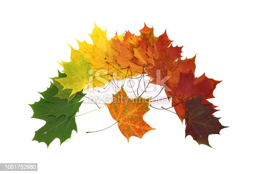 istock color palette from autumn leaves, isolated 1051752680