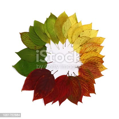 istock color palette from autumn leaves, isolated 1051752684