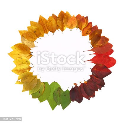istock color palette from autumn leaves, isolated 1051752728