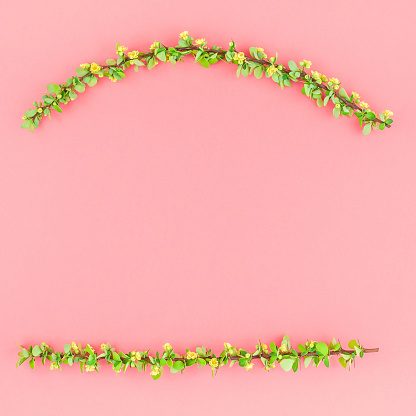 istock Color paper background with flowering barberry 1000993898