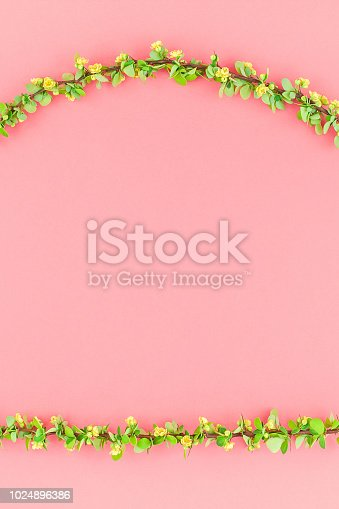 istock Color paper background with flowering barberry 1024896386