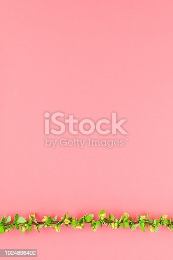 istock Color paper background with flowering barberry 1024896402