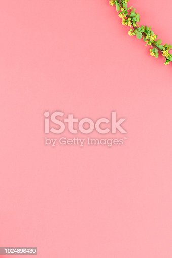 istock Color paper background with flowering barberry 1024896430