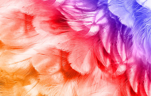 color trends chicken feather texture background - pfau bilder stock-fotos und bilder