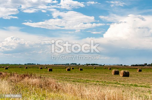 Bales of hay rolled up on a farm in Colorado with Rocky Mountains in the background.