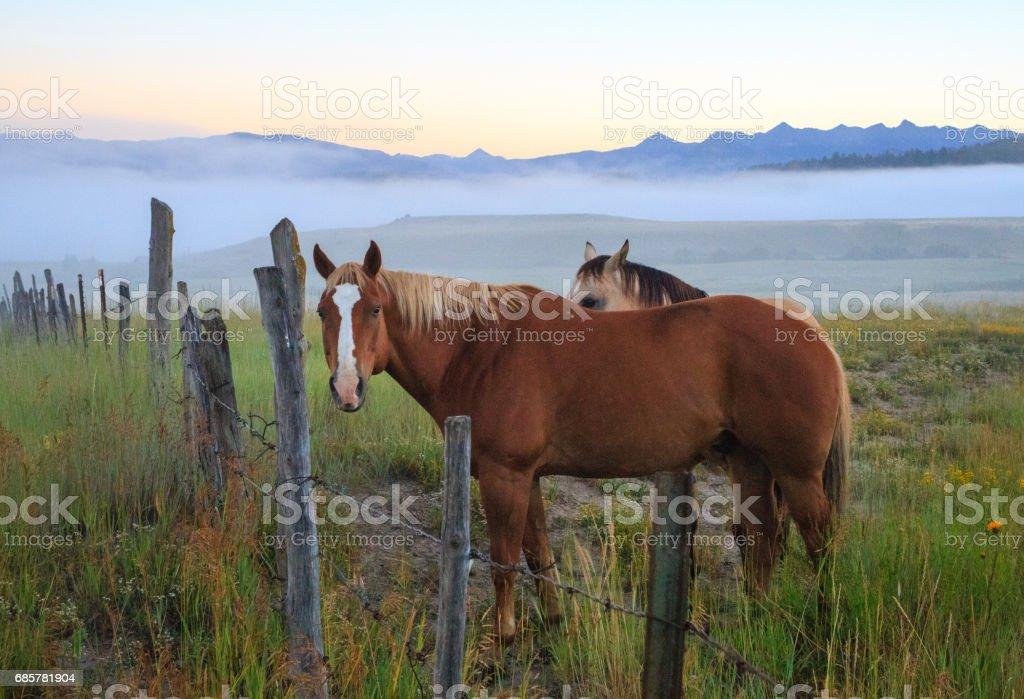 Colorado Horses royalty-free stock photo