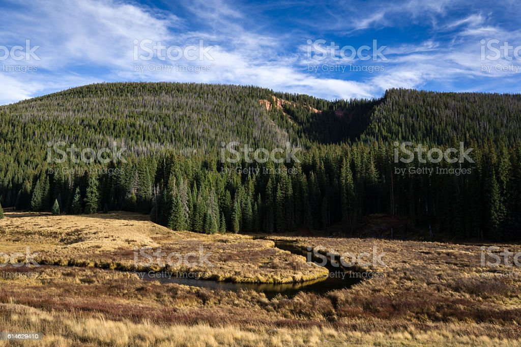 Colorado Meadow stock photo