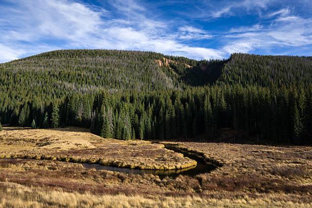 Colorado Meadow - foto de stock