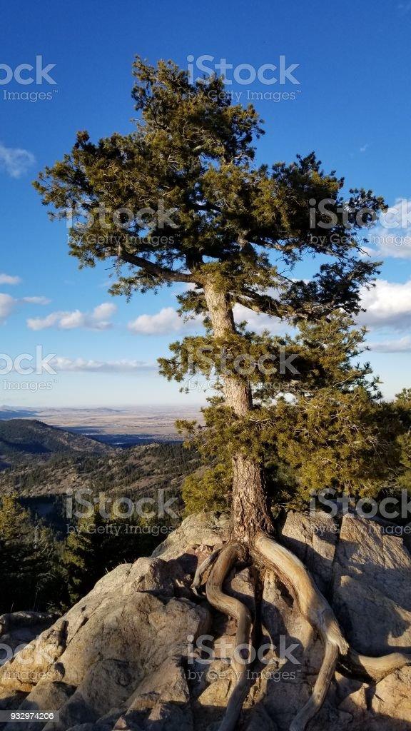 Colorado Rockies- Front Range stock photo