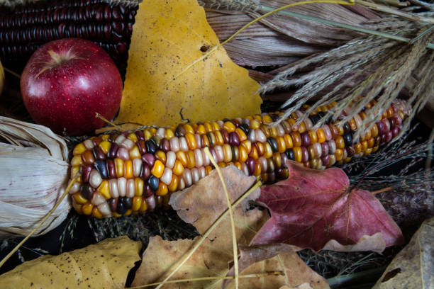 Colored Autumn Corn and Apples stock photo