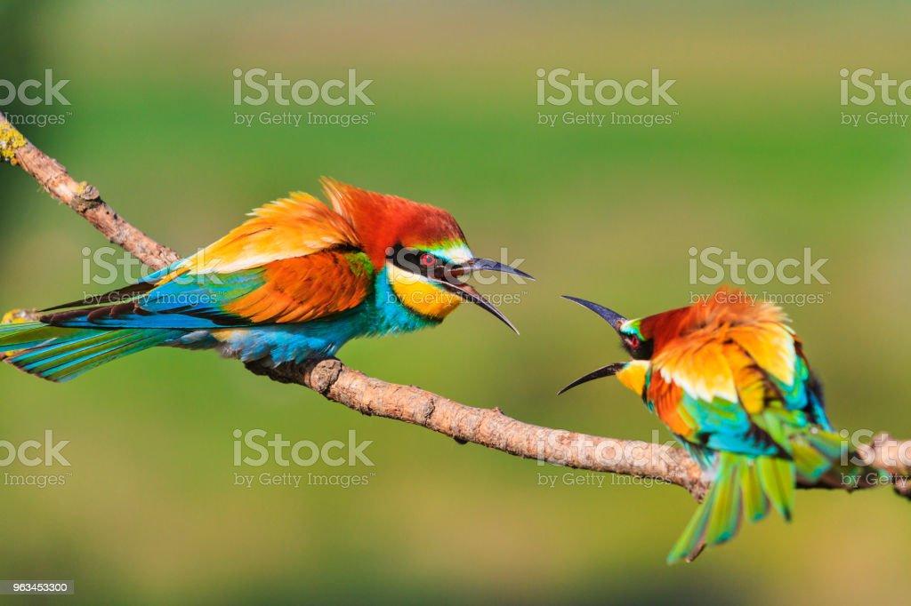 oiseaux colorés sont de démolition sur les branches - Photo de Abeille libre de droits