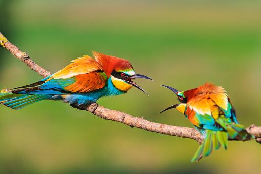 Photo libre de droit de Oiseaux Colorés Sont De Démolition Sur Les Branches banque d'images et plus d'images libres de droit de {top keyword}