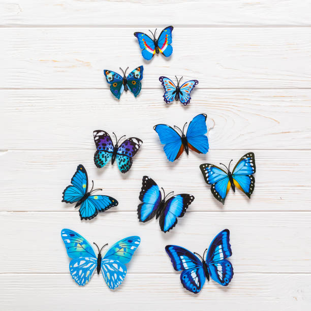 Colored butterflies on wooden white background flat lay copy space picture id842953060?b=1&k=6&m=842953060&s=612x612&w=0&h= rmgmojolwkckkr7f6lrhzdygoimtufxarcn8veiun4=