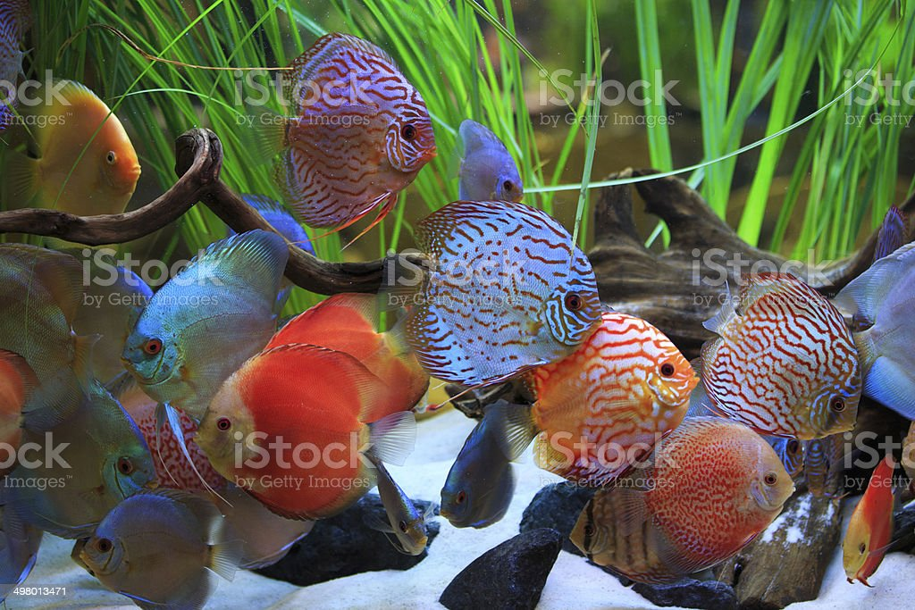 colored discus royalty-free stock photo