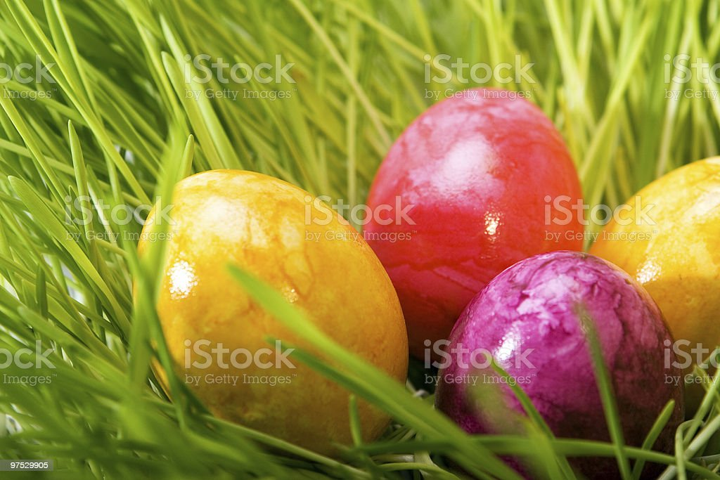 colored easter eggs in grass royalty-free stock photo