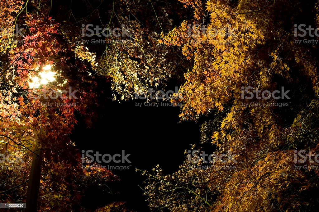Colored leaves in the night stock photo