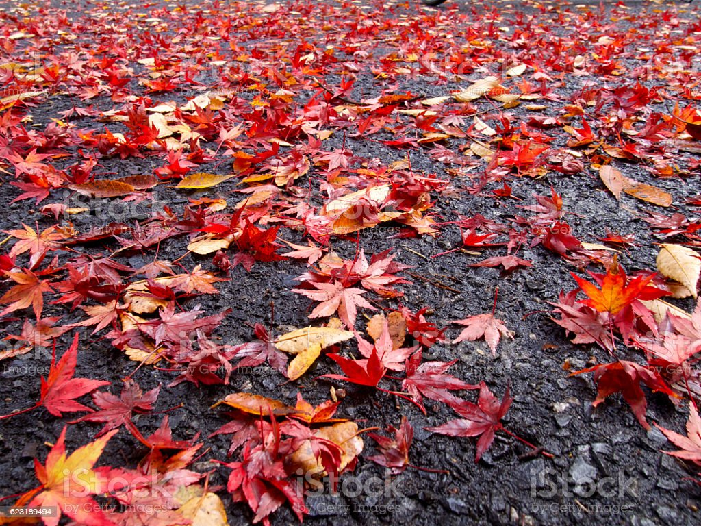 Colored leaves of all over the way stock photo