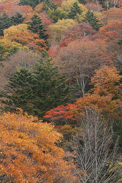 色の葉 coppice ストックフォト