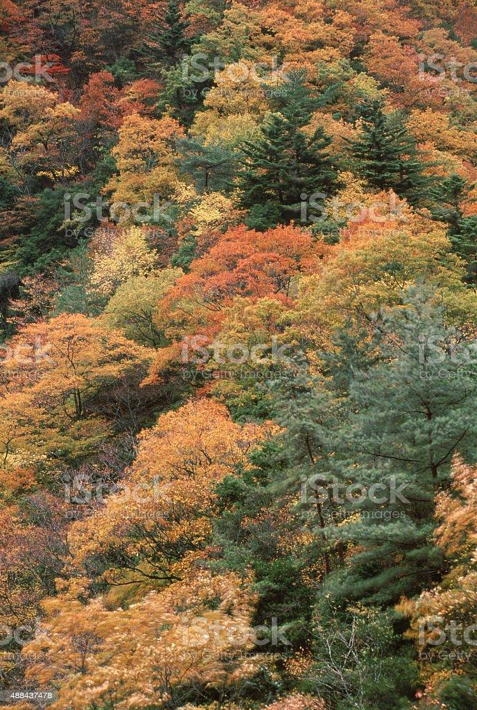 色の葉グローヴのその他の木 ロイヤリティフリーストックフォト