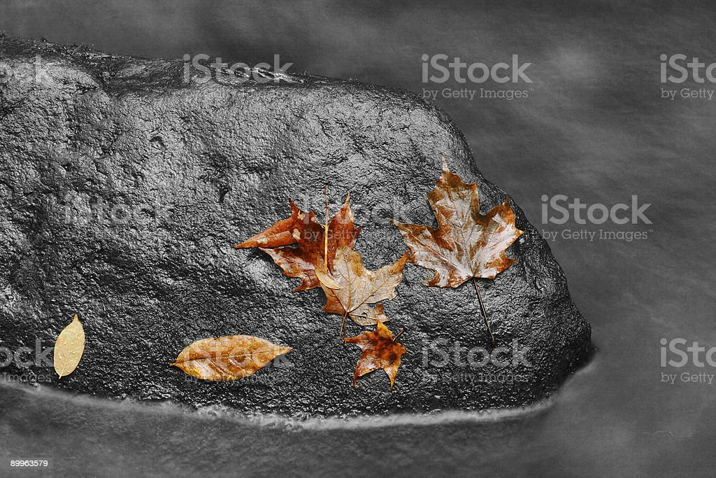 Colored Leaves on BW Stream royalty-free stock photo