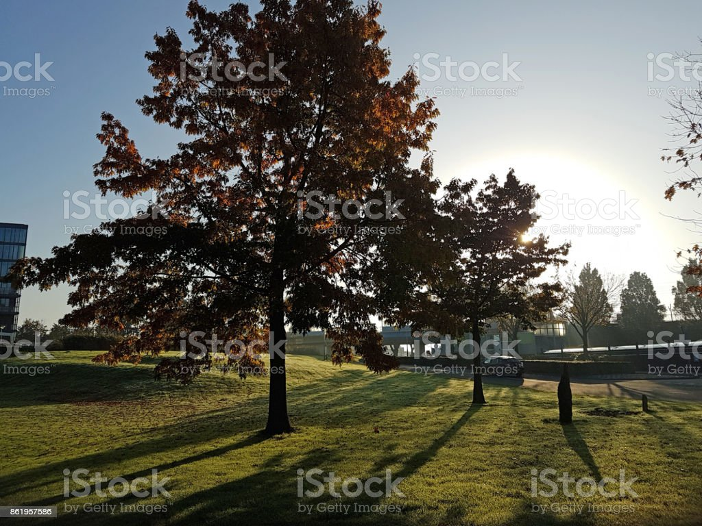 Colored Leaves On Trees In Morning Autumn Sun Stock Photo More