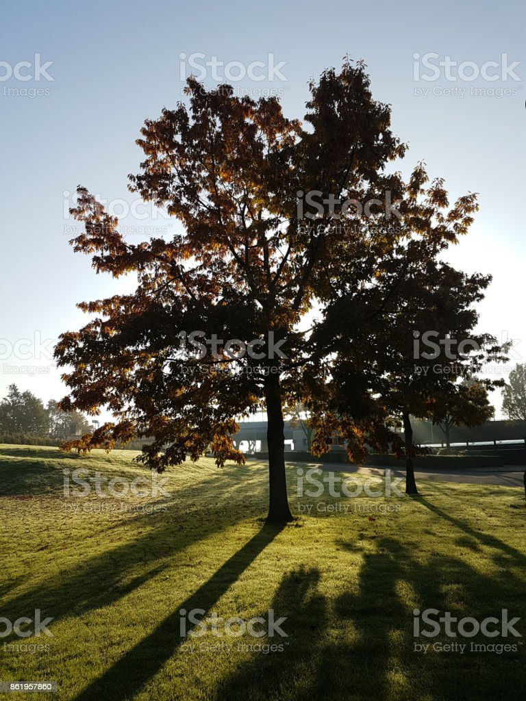Colored Leaves On Trees In Morning Autumn Sun Stock Photo