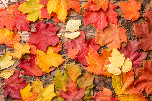 istock colored leaves on wooden board 975178324