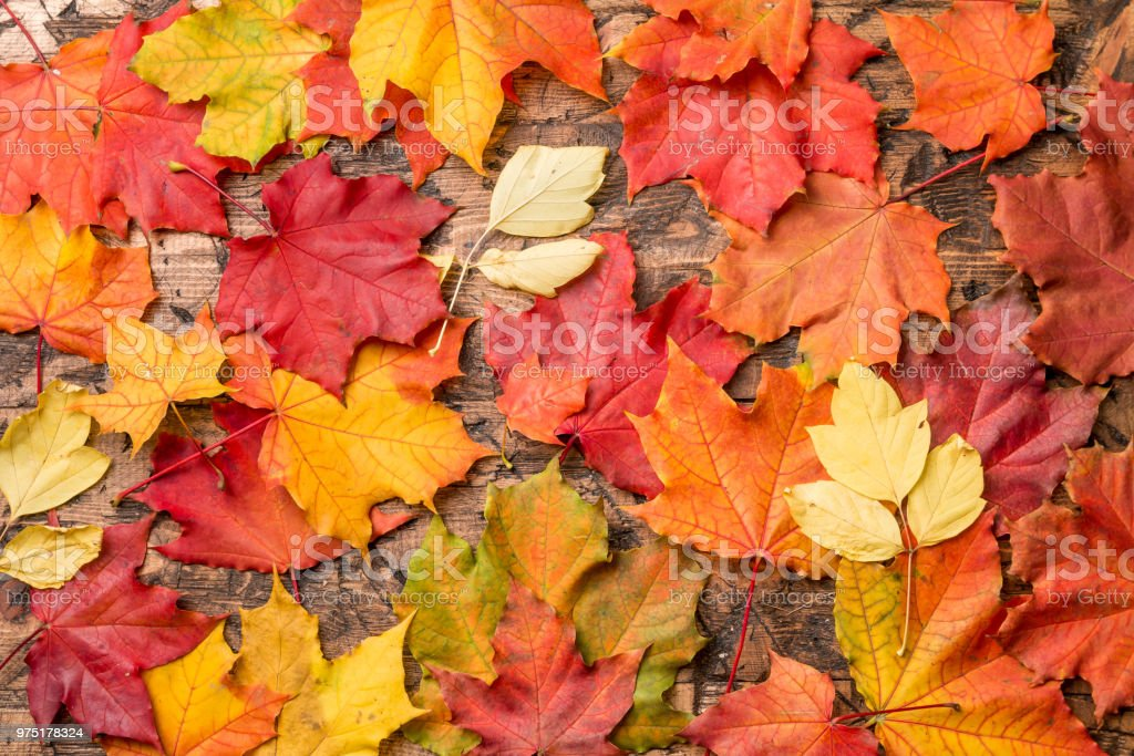 colored leaves on wooden board - foto stock