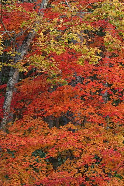 色の葉 ストックフォト