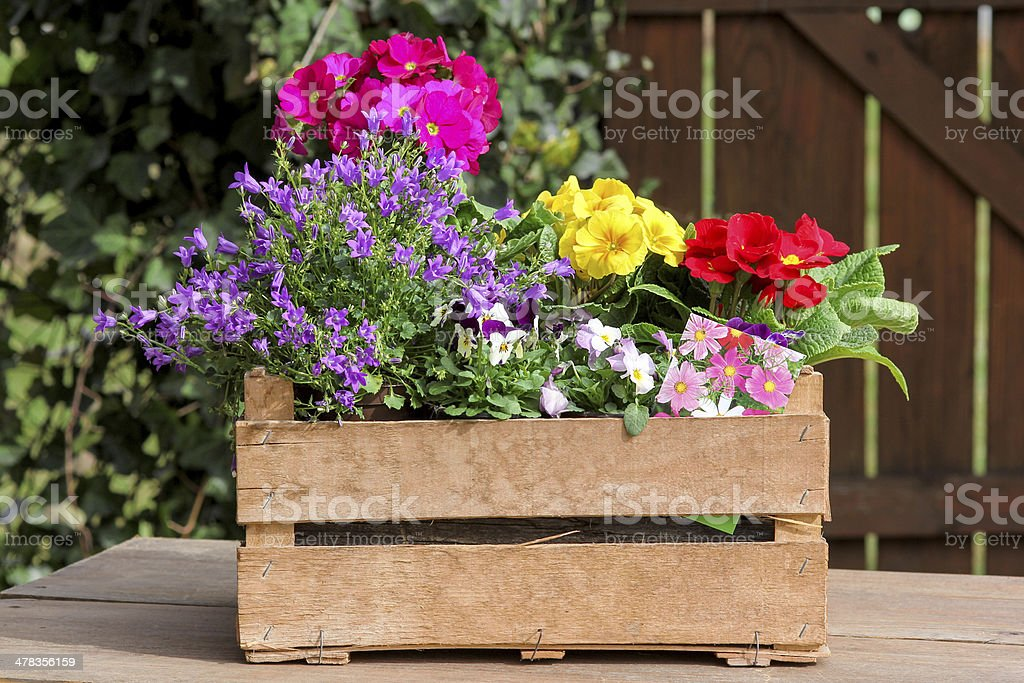 Colored potted plants stock photo