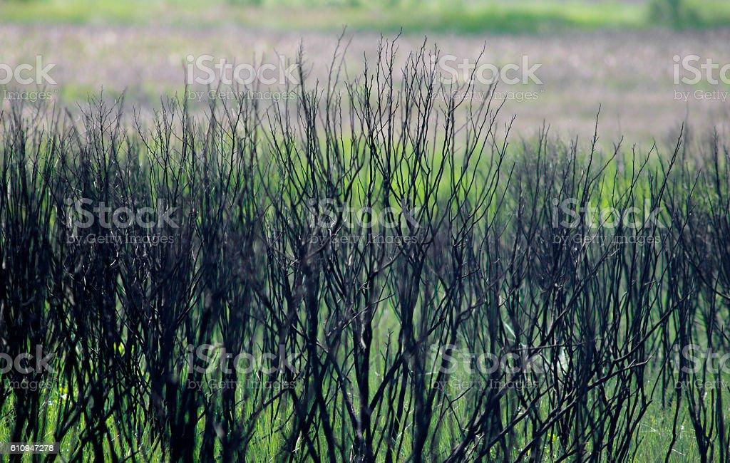 Colored prairie grasses stock photo