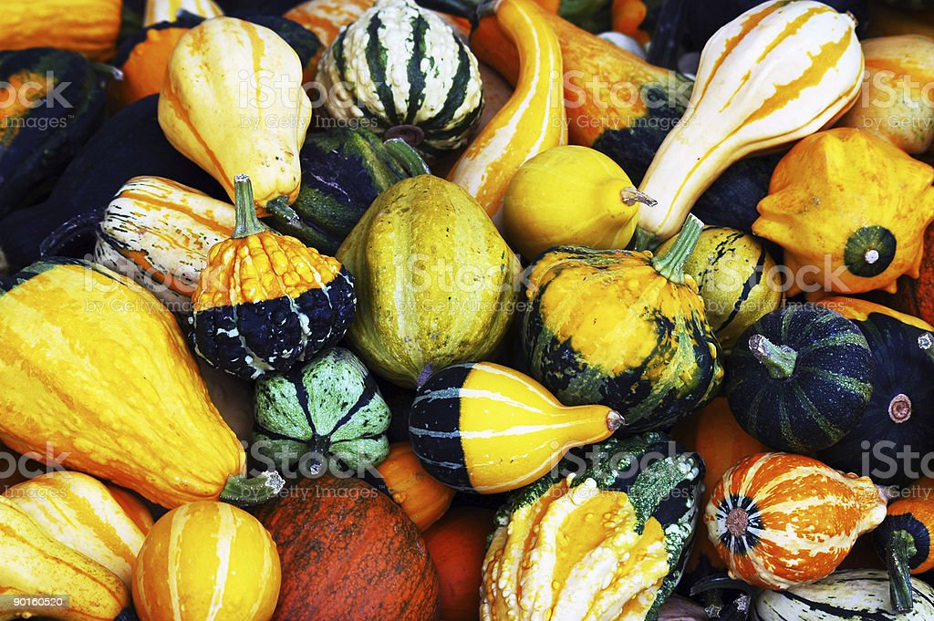 Colored Pumpkins royalty-free stock photo