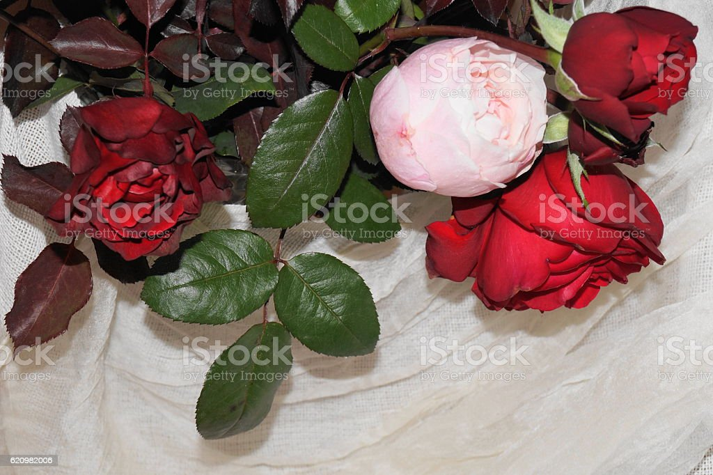 Colored roses and white silk foto royalty-free