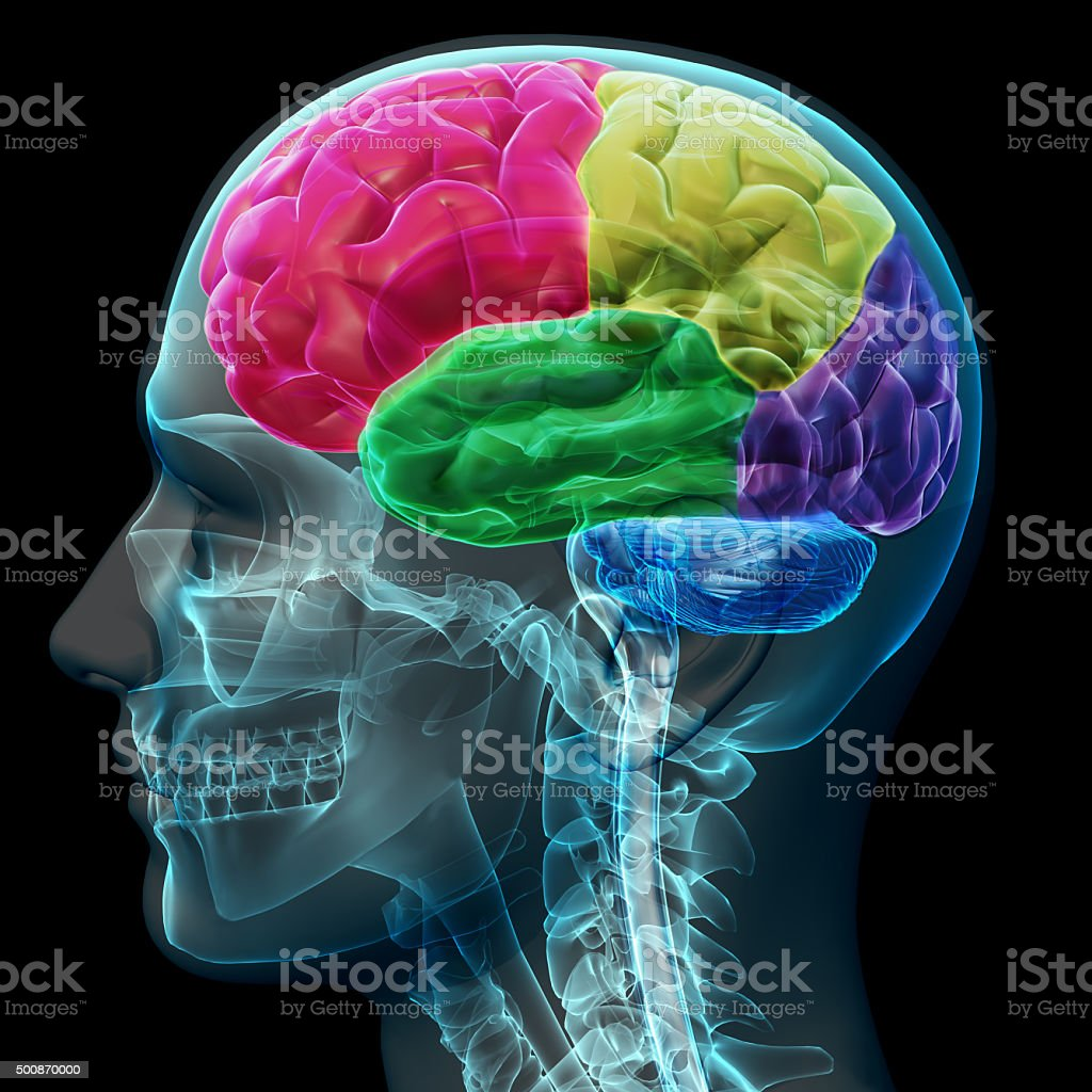 Colored sections of a male human brain ,x ray concept. stock photo
